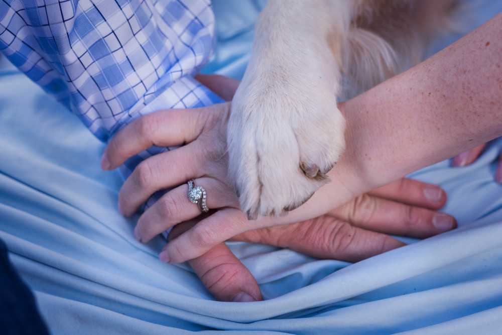 engagements with dogs denver