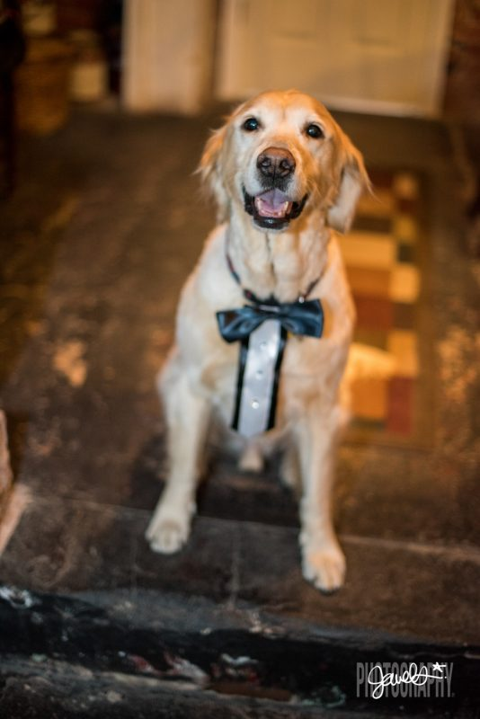 best dog wedding photos